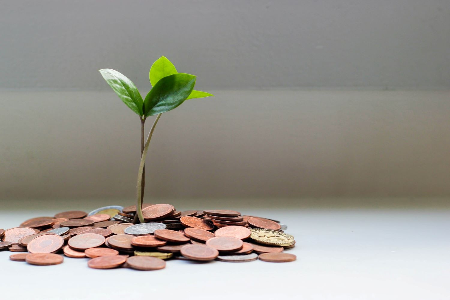 plant growing out of loose coins
