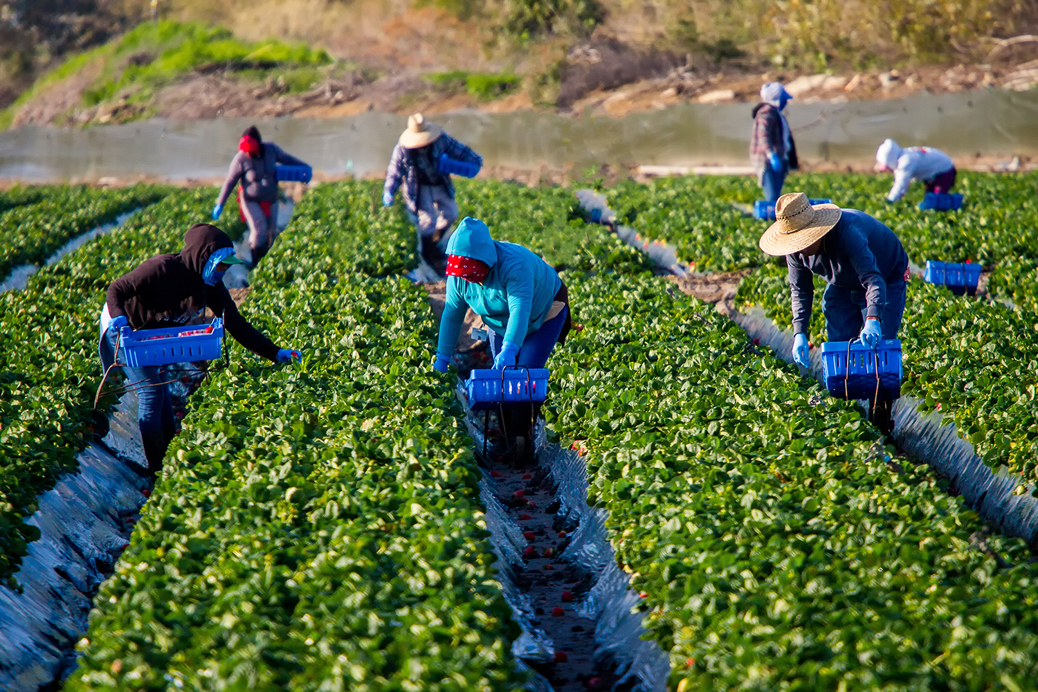 Farm workers.