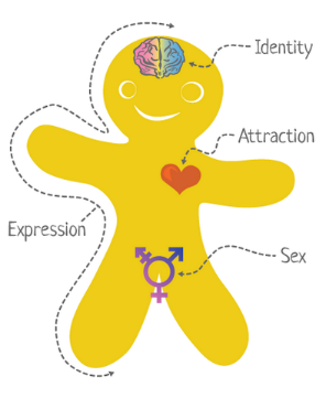 gender identify, gender expression, biological sex, and sexual orientation. All of these elements are independent of one another; they are not connected. Gender identify is how you, in your head, think about yourself. Gender expression is how you demonstrate who you are. Biological sex refers to the organs, hormones and chromosomes you possess. Sexual orientation is who you are attracted to. Each of these elements exists on a continuum. For example, let's take gender expression. You don't have to be either completely feminine or completely masculine, you can fall somewhere in between the two.
