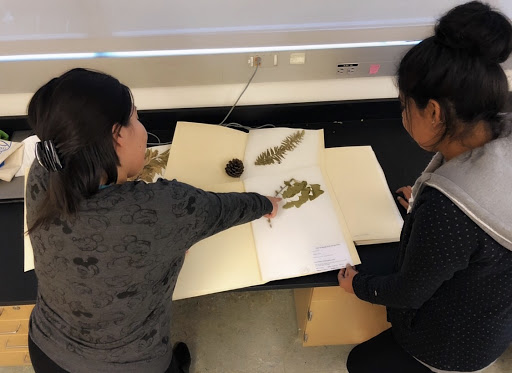 Two lab members study a preserved plant specimen