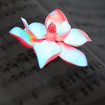 Flor y Canto