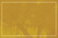 Yellow background with trees