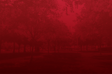 red background with trees