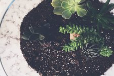 plants grown around white boundary