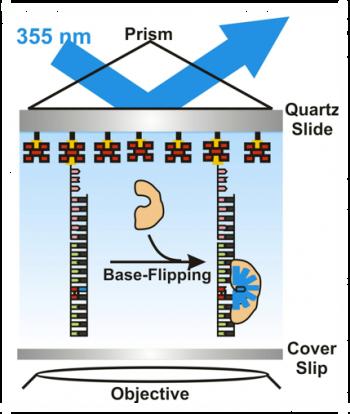 Chemistry base-flipping