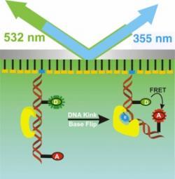 Flipping Mechanism of DNA Repair Enzymes