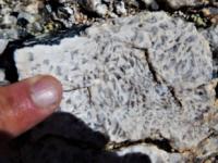 Examining a rock