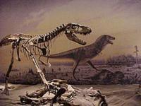 dinosaur museum display