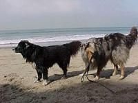 Tug and Glindie dogs on beach