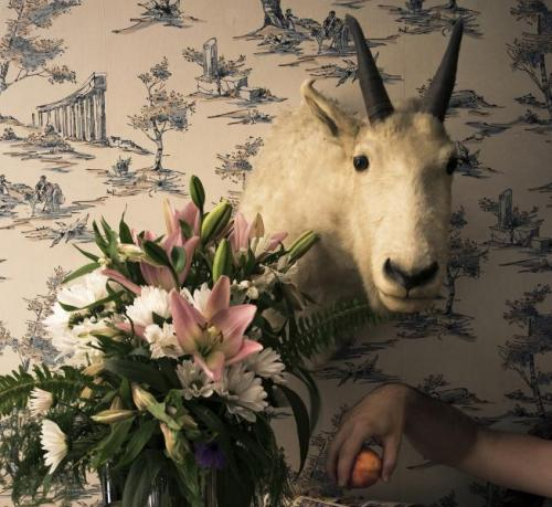 A taxidermied goat's head is mounted against a wall covered in wallpaper, a man's arm extends into the lower right hand side of the image and he is holding an orange.