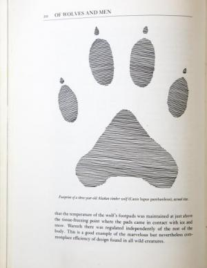 Illustration of wold paw print in a book.
