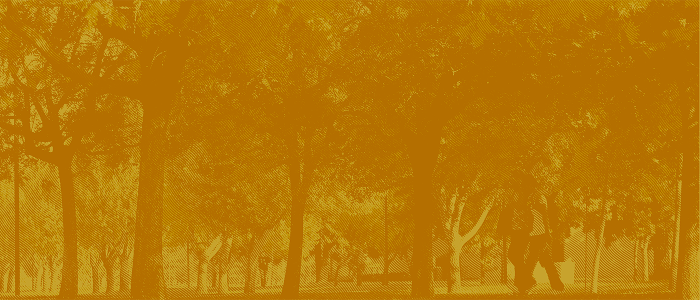 golden background over campus photo