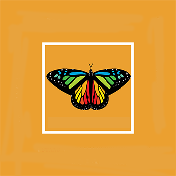 multi colored butterfly
