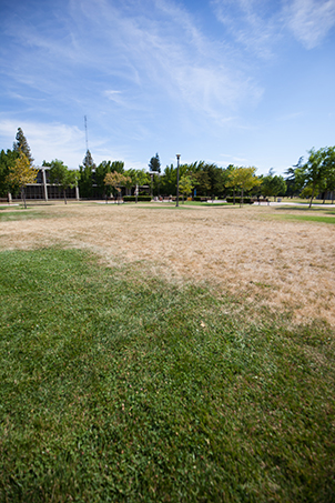 browning grass on campus